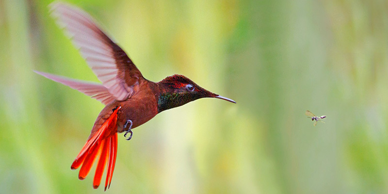 Bird Watching At The Cuffie River Nature Retreat Tobago